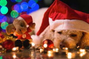 Christmas, hat, dog, lights, decorations