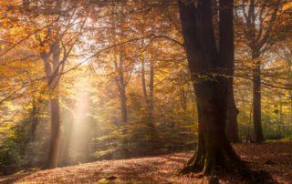 autumn, trees, light, sunshine